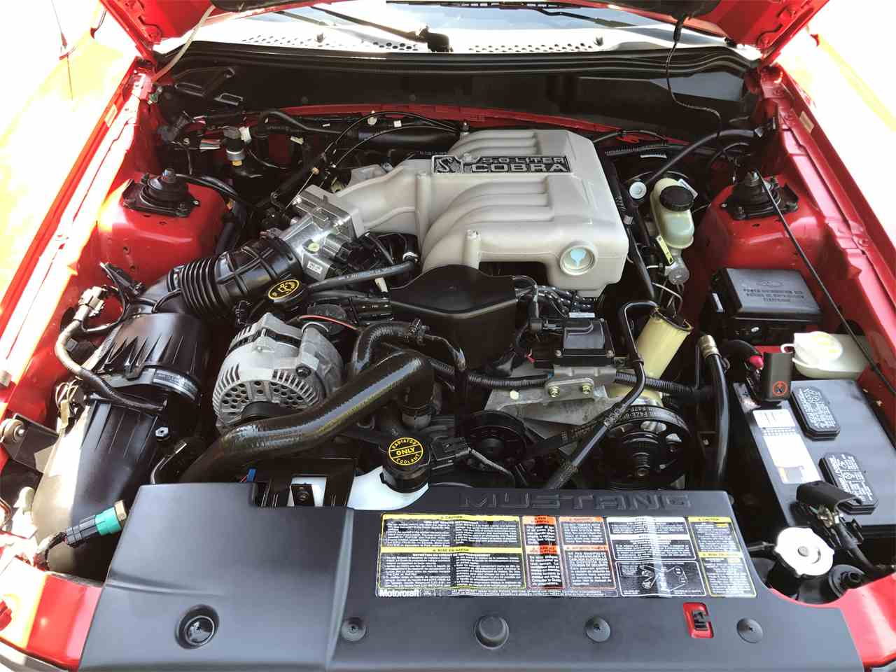 Large Picture of '94 Mustang Cobra - LHG8