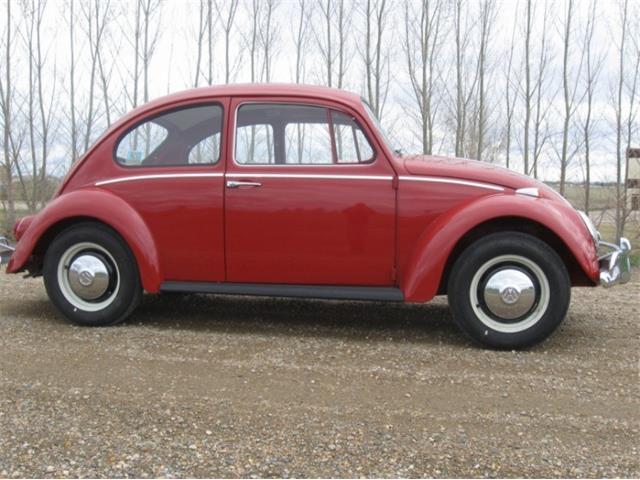 1966 Volkswagen Beetle | 826749