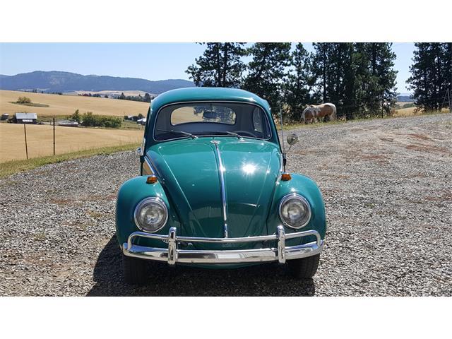 1964 Volkswagen Beetle | 892245