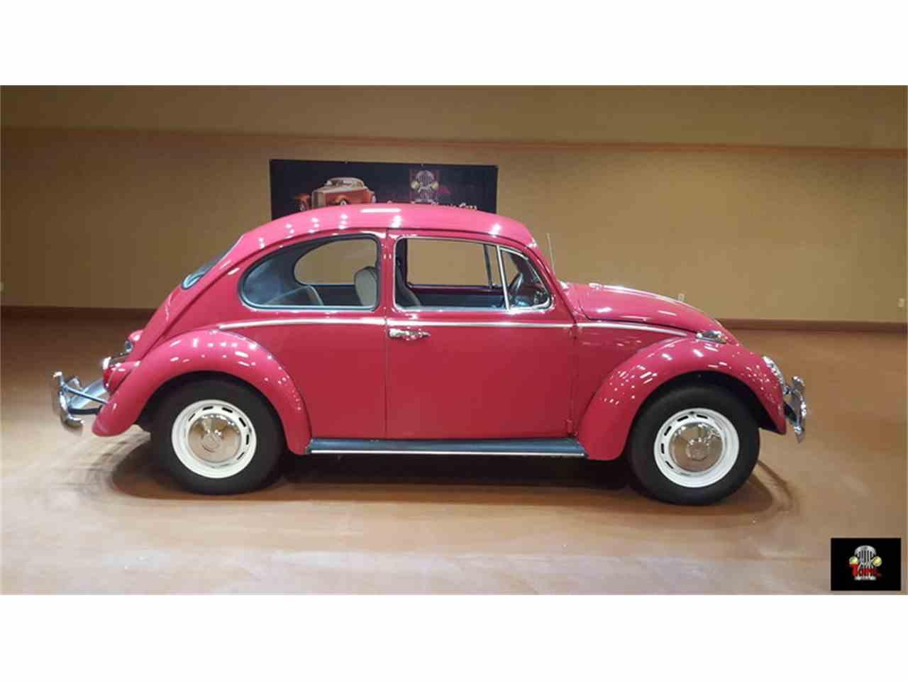Large Picture of '66 Beetle - JLJK