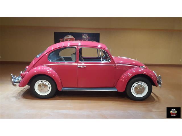 1966 Volkswagen Beetle | 914384