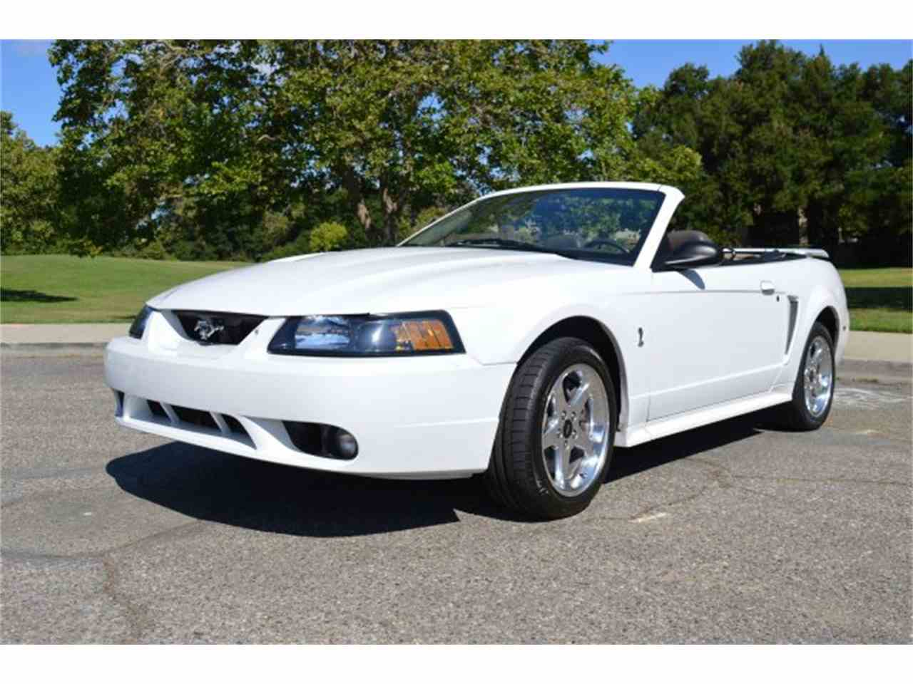 2001 ford mustang svt cobra convertible for sale. Black Bedroom Furniture Sets. Home Design Ideas